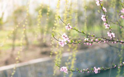 Un printemps qui s'annonce… actif!